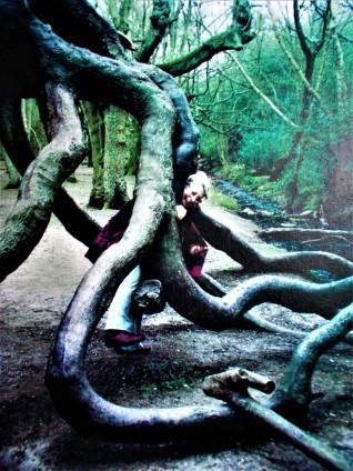 tree_veronicaPhillips